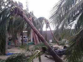 Daños en el jardín de la casa de mis papás unas horas después del paso del huracán Odile. (Jorge Garza - MetMEX)